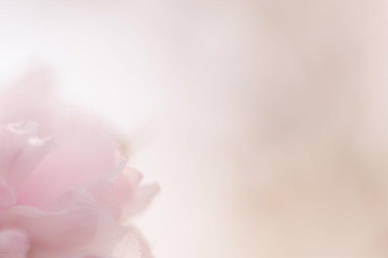 ぼんやりとかすむ桜の花