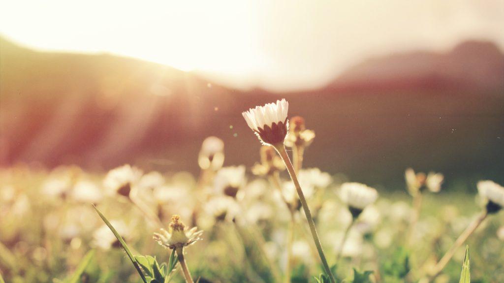 野原に揺れる花