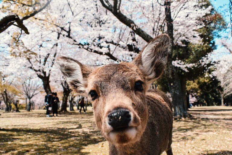 日本の歴史を学ぼう